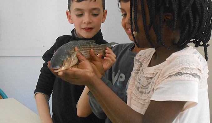 La morphologie du poisson
