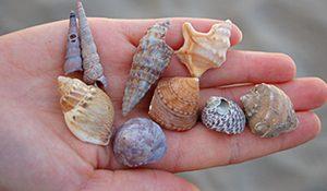 L'environnement naturel littoral et marin